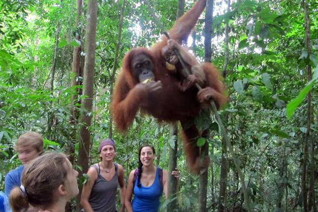 Bukit Gunung Leuser jungle trek - sumatra tour