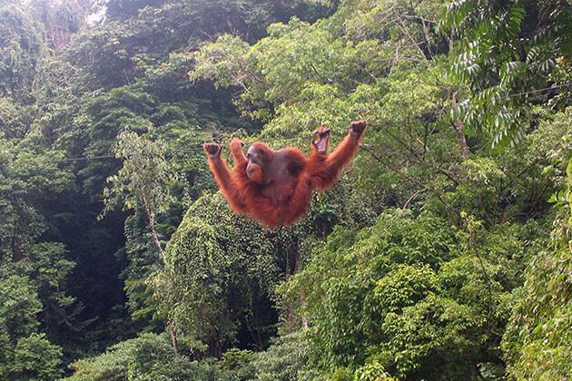 Bukit Lawang - ideal destination in Sumatra for trekkers to explore around