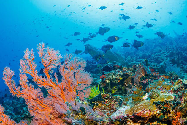 Bunaken Marine Park - one of the most beautiful places in Indonesia