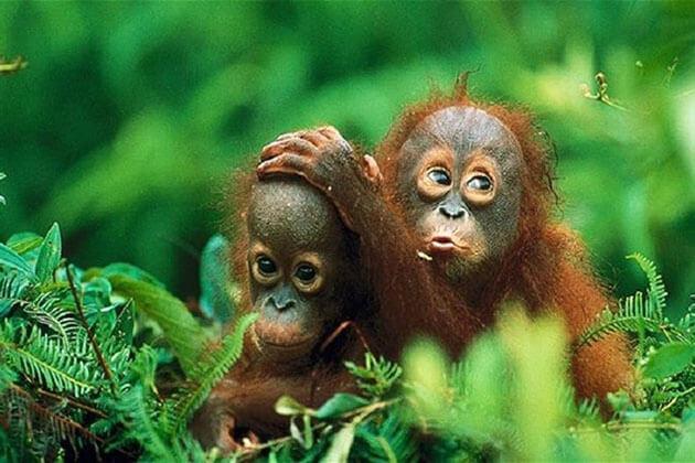 Gunung Leuser National Park - must visit destination in sumatra tour