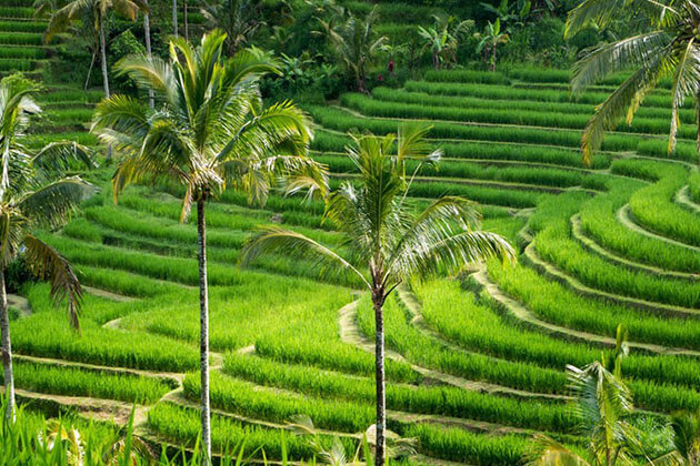 Jatiluwih Rice Fields - great place to visit in Bali Indonesia