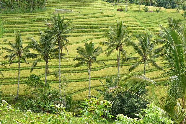 Jatiluwih rice terraces - indonesia adventure trip