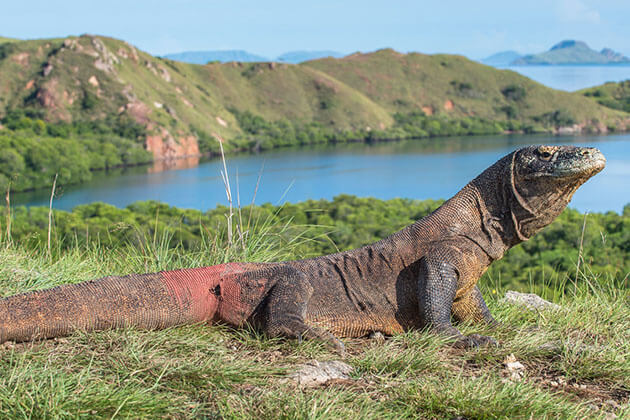 Komodo National Park is a great heritage site in Indonesia recognized in1991