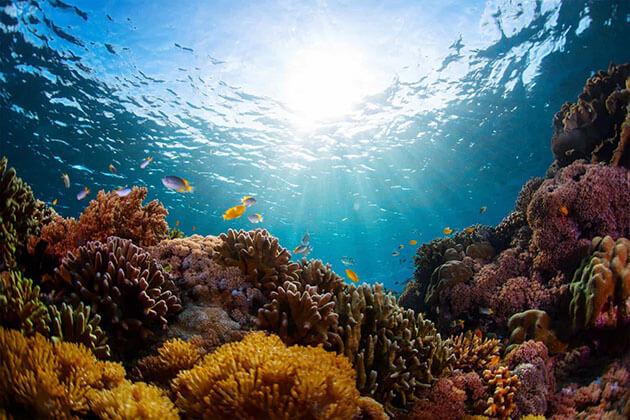 Menjangan Island marine life