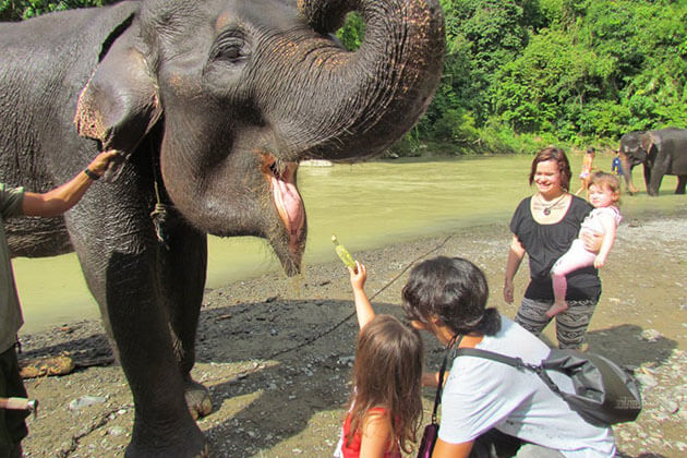 Sumatra - a great family holiday destination to learn about the flora and fauna