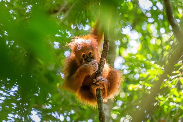 Sumatra - destination to put on indonesia itinerary