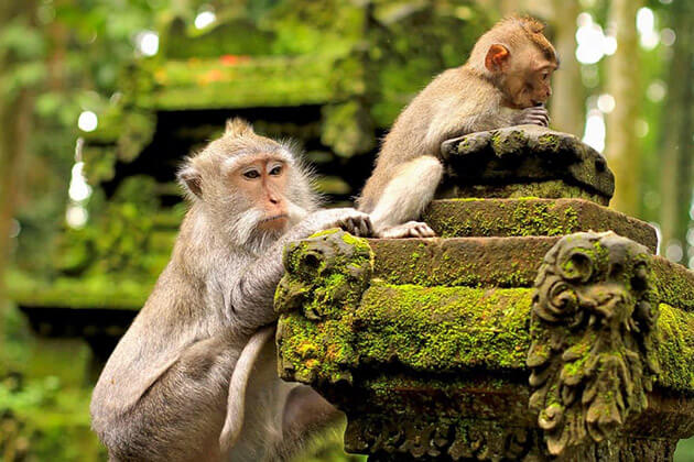 Ubud Monkey Forest indonesia family travel