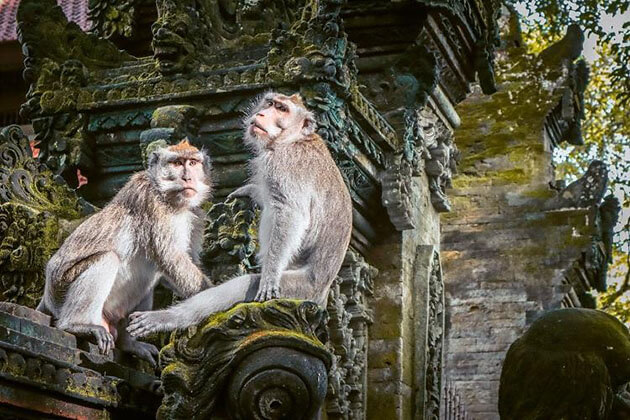 Ubud Sacred Monkey Forest - place to visit in Bali