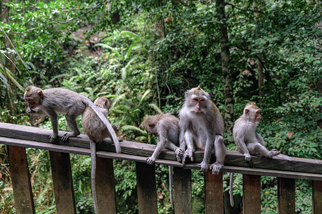 Ubud - the must-see attraction in Bali Indonesia