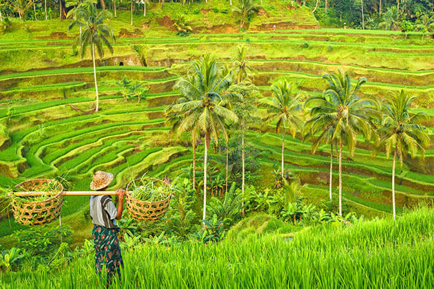 Visit Tegalalang rice terraces - great thing to do in indonesia
