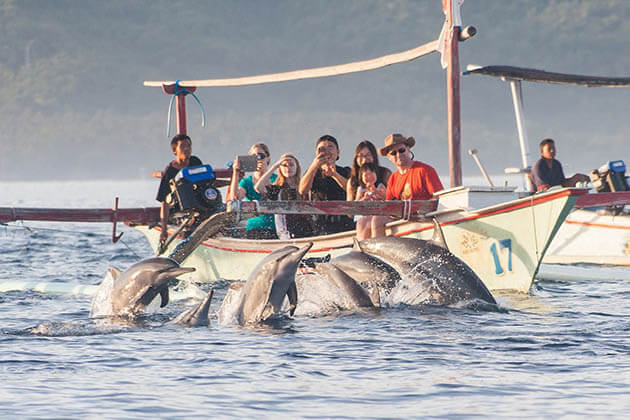 Watching dolphin in Lovina - an amazing thing to do in Bali
