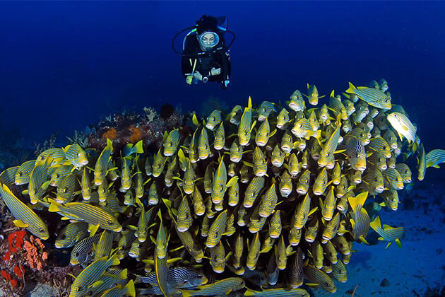 best time for diving in indonesia - Jara Ampat