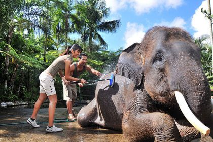 indonesia family trip - bathing elephant