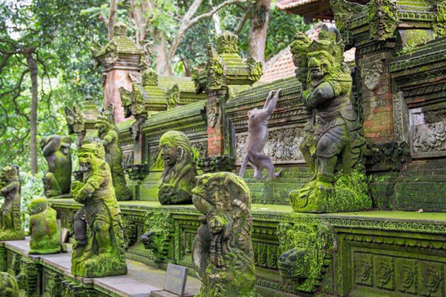 monkey forest - ideal place to visit in Indonesia adventure tour