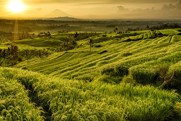 rice terraces of Jatiluwih - great thing to see in indonesia honeymoon vacation