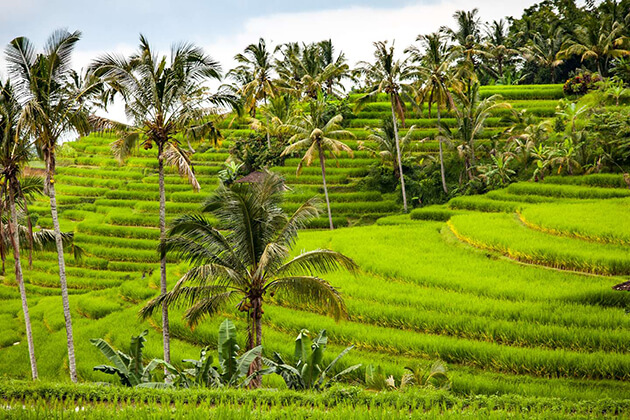 the Subak - a mesmerizing culture heritage site in Indonesia