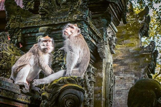 ubud monkey forest - interesting place for indonesia honeymoon trip